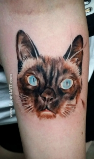 Chelsea's cat